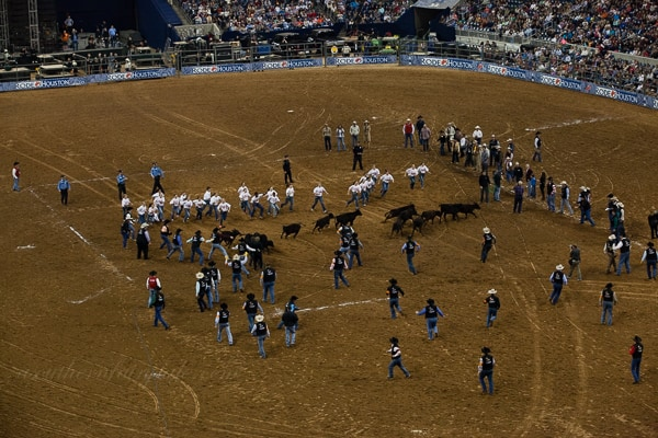 2014 houston rodeo mutton busting