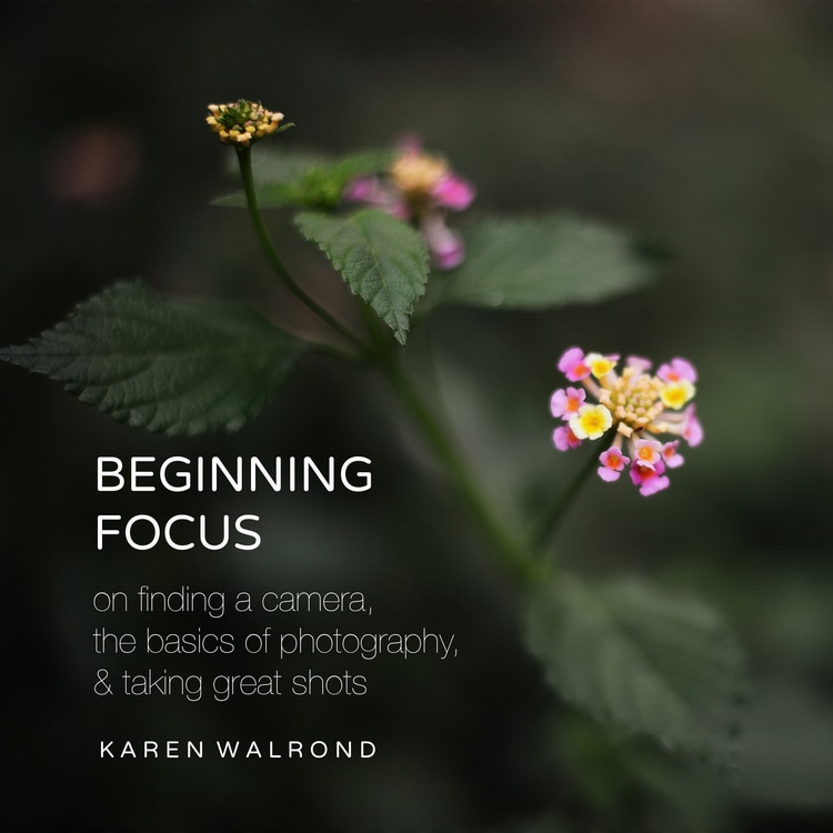 Beginning Focus: a Photography e-book by Karen Walrond