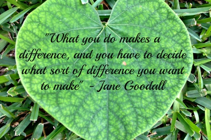 Jane Goodall Difference Quote Blogust